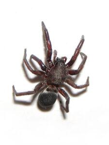 betydningen af drømme om en edderkop - drømmetydning edderkop som drømmesymbol