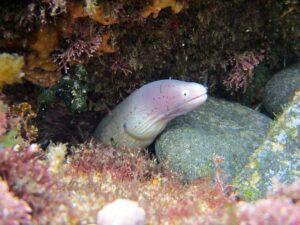 betydningen af drømme om en ål - drømmetydning en ål som drømmesymbol