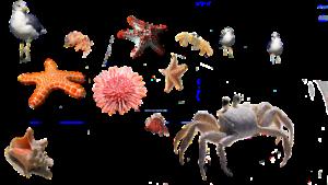 betydningen af drømme om et dyr - drømmetydning at et dyr som drømmesymbol