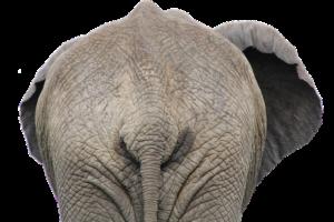 betydningen af drømme om en elefant - drømmetydning en elefant som drømmesymbol