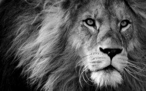 betydningen af drømme om en løve- drømmetydning en løve som drømmesymbol