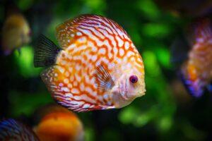 betydningen af drømme om fisk - drømmetydning at fiske som drømmesymbol