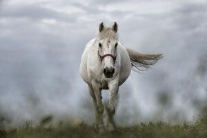 betydningen af drømme om heste - drømmetydning hest som drømmesymbol