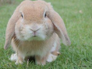 betydningen af drømme om kaniner - drømmetydning kanin som drømmesymbol