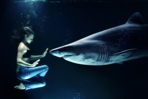 betydningen af drømme om hajer - drømmetydning haj som drømmesymbol
