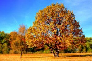 betydningen af drømme om træer - drømmetydning skov som drømmesymbol